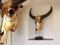 buffel-gold