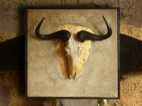 gnoe-schedel-op-paneel-met-craquele-achtergrond