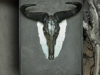 gnu-skull-in-pewter-on-panel