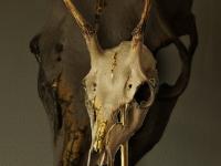 herten-schedel-antique-gold