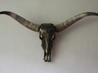 longhorn-gegraveerd