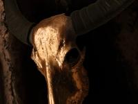 waterbuffel-schedel-in-koper