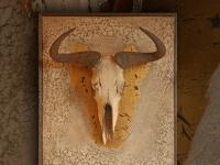 gnoe-schedel-in-antique-finish-op-paneel-met-craquele-structuur