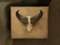 kafferbuffel-schedel-op-paneel