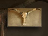 wandpaneel-met-buffel-schedel-longhorn