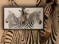 wandpaneel-met-burchell-zebras-en-preparaat