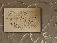 wandpaneel-schapen-pan048-09