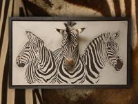 wandpaneel-burchell-zebras-en-zebrapreparaat