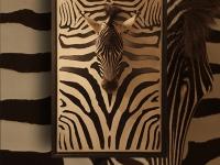 wandpaneel-zebra-kop-op-zebraskin-pan050sp-09-maat-91x139cm