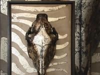 wandpaneel-zebra-schedel-special-maat-50x75cm-met-baklijst